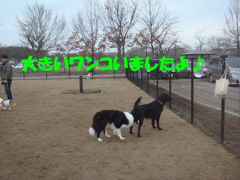 DSC07430c.jpg