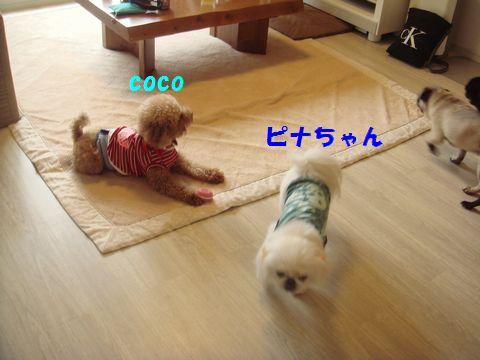 DSC07689c.jpg