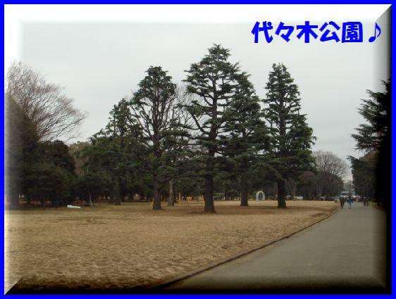 DSC09011c.jpg
