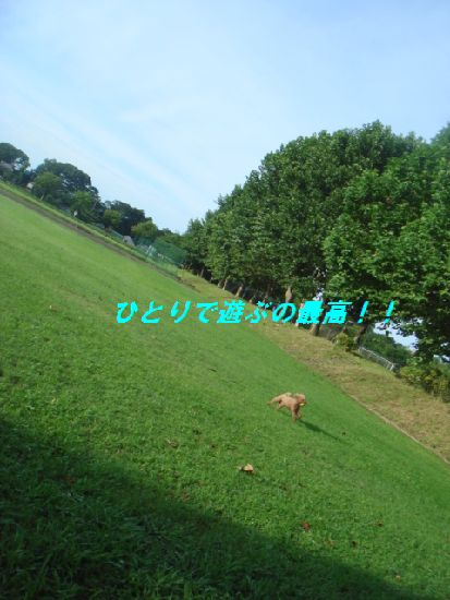 画像 228c.jpg